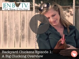Backyard Chicken Episode 1