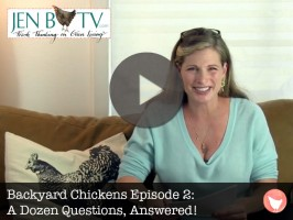 Backyard Chickens Episode 2: A Dozen Questions, Answered!