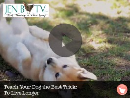 Teach Your Dog the Best Trick: To Live Longer