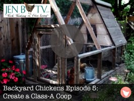 Backyard Chickens Episode 5: Create a Class-A Coop