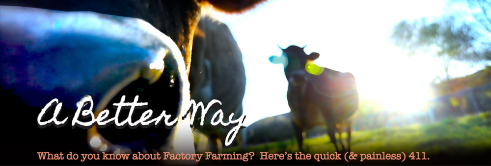 The 411 on Factory Farming