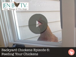 Backyard Chickens Episode 6: Feeding Your Chickens