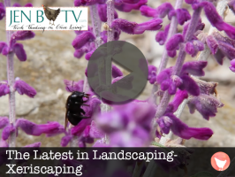 Xeriscaping Featured Image